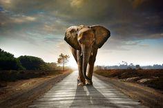 3840x2543 elephant 4k computer wallpaper hd free download