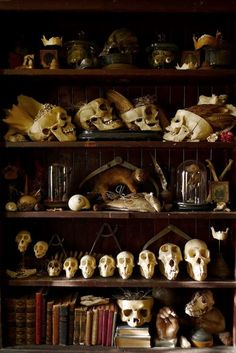 a place to keep skulls
