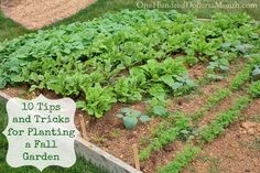 The spring, summer and fall are the three seasons for a garden. Planning a garden after summer means tips and tricks for planting a fall garden are needed.