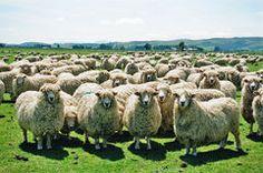 Moutons - Télécharger parmi plus de 51 Millions des photos, d'images, des vecteurs et . Inscrivez-vous GRATUITEMENT aujourd'hui. Image: 1770079