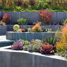 Google Image Result for http://www.rogersgardenslandscape.com/wp-content/gallery/modern-gardens/thumbs/thumbs_white-sails-perret-2.jpg