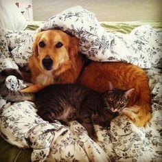21 adorables parejas de perros y gatos que son mejores amigos y te harán dar chillidos de la emoción