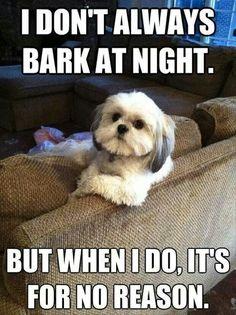 I don't always bark at night... Dog humor - my Maltese / Shih-tsu's do this often.