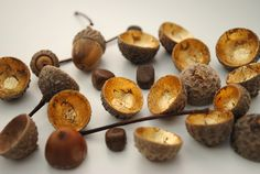 I'm SO doing this.  Just in love with the gold leafed insides of these acorn tops! via Minieco