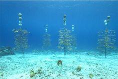 Discover Bonaire Marine Park Coral Restoration