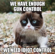 Find the fresh grumpy cat funny animal memes hilarious pets pictures Grumpy Cat Quotes, Funny Grumpy Cat Memes, Cat Jokes, Funny Cats, Funny Memes, Hilarious, Funny Minion, Funny Animal Jokes, Funny Animals