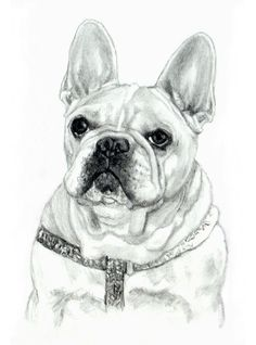 """French Bulldog Portrait Art Dog Print in 8""""x10"""" Mat from Original Pencil Drawing by P. Tarlow by PTarlowArt on Etsy"""