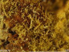 Phosphuranylite. La Faye mine, Grury, Bourgogne, France Source: University of Arizona Mineral Museum 8692