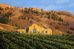 Award-winning Nk'Mip Cellars in Osoyoos. Nkmip is North America's first native owned and operated winery. Caves, Banff National Park, National Parks, Sonora Desert, Discover Canada, Resort Spa, Wine Country, British Columbia, Travel Usa