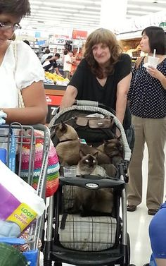 We Are Siamese If You Please - Crazy Cat Lady at Walmart Fail - Funny Pictures at Walmart