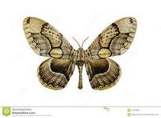 moth - Google zoeken