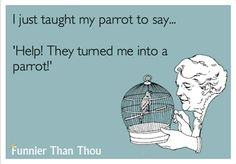 I just taught my parrot to say 'Help! They turned me into a parrot!'