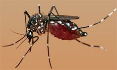 Public Heath Department of SDMC has started intensive checking of breeding of aedes mosquitoes and prosecuted Educational Institutions and Government offices in its four Zones. Commissioner Manish Gupta directed the officials of Public Health Department to monitor all the colonies where breeding of mosquito is high on daily basis.
