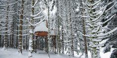 Cabane dans les arbres Vosges, nuit insolite au coeur des Vosges avec Bol d'air
