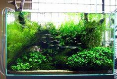 Fish tank design