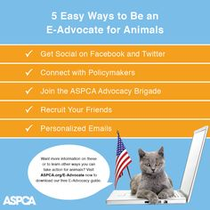 You can help pass laws in just five minutes from your computer! Read our top five quick and easy ways to help: http://www.aspca.org/blog/5-easy-ways-help-pass-laws-animals-your-computer