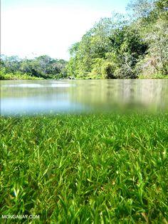 Mato Grosso du Sul, Brazil   Rhett Butler