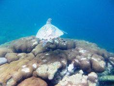 Snorkeling at Gili Trawangan - Indonesia