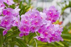 Come coltivare le orchidee, piante dai fiori colorati e meravigliosi. In autunno la fioritura