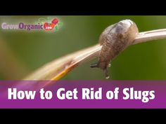 4 Ways to Get Rid of Garden Slugs - wikiHow