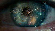 Life seen through an eye