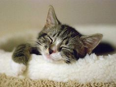 Sweet Dreams, Little Kitteh.