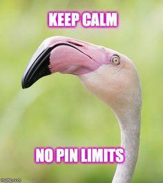 Flamingo | Created by N. E. Poe  (imgflip)