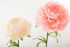 Giant paper peonies in light pink and cream Paper Peonies, Giant Flowers, Cream, Plants, Pink, Flowers, Creme Caramel, Planters, Roses