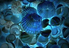 """Fish Shells"" by my4otos, via Flickr"
