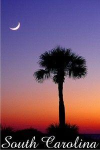 Palmetto Moon