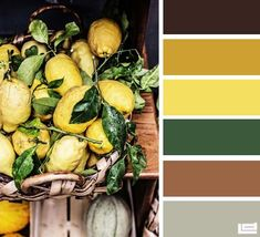 Colour coordination based on the colours of Italian food