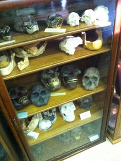 International Cryptozoology Museum in Portland, Maine. Cryptozoology Museum, Stranger Things Monster, Fauna Marina, Strange Events, Legends And Myths, Creepy Horror, Demonology, Mothman, Weird Science