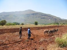 agriculture SOUTH AFRICA - Google Search