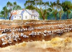 """Mary Ellen Golden Watercolors -Cotton fields surround an old white farmhouse in the first of my new series of """"Back Home"""" watercolor prints. The name is a line from Creedence Clearwater Revival's Cotton Fields, which kept running through my head as I painted the watercolor."""