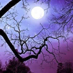 winter tree print grape aubergine purple black photo full moon snow covered branches night sky