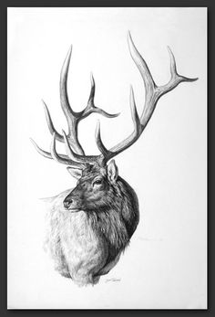 1000 Ideas About Elk Tattoo On Pinterest Hunting