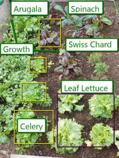 10 cold tolerant vegetables.Winter is a great growing season