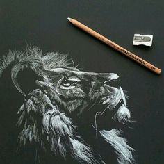 Charcoal Drawing White Charcoal on Strathmore Artagain Black Paper - Black Paper, Animal Art, Art Drawings, Amazing Art, Black Paper Drawing, Art, Charcoal Drawing, Paper Art, Charcoal Art