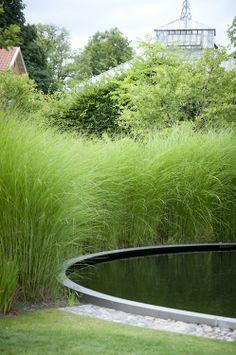 Garden Beauty from Jenny and Jesper Liske....