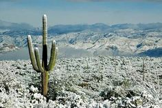 A very rare snowfall in Saguaro National Monument East, Tucson, AZ USA. Located on the very far side of Tucson, close to Vail, AZ Snow In Arizona, Tucson Arizona, Cool Pictures, Cool Photos, Amazing Photos, The Far Side, Before Sunrise, Us National Parks, Beautiful World
