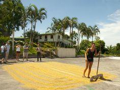 Fotografía: Destinos Reps - Plantación de café - Secado de grano (Costa Rica)