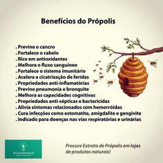Benefícios do Própolis  Dicas Naturais - www.dicasnaturais.com  #propolis #abelhas #abelha #saude #saudeebemestar #saudavel #natural #dicas #dicassaudaveis #dicasnaturais