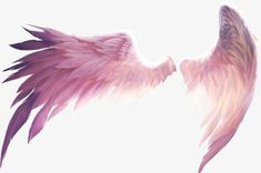 Beautiful wings PNG and Clipart Angel Wings Png, Angel Wings Drawing, Wings Of Angels, Feather Angel Wings, Picsart Png, Drawing Base, Anime Angel, Art Reference Poses, Art Drawings Sketches