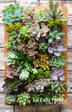 um muro que pega muito sol, quro fazer um jardim vertical. qual planta devo…