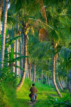 Oh I would love to ride on this trail! #Bali, #Indonesia | @GuessQuest collection