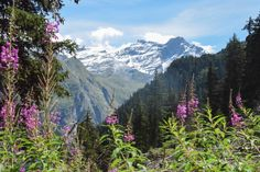 Mountain views from the forests of Verbier