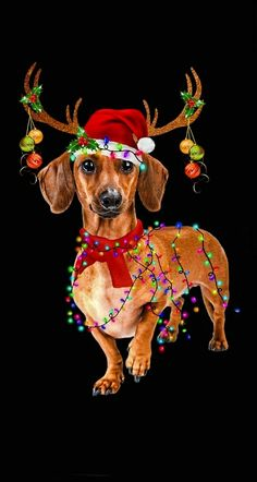 Christmas Quotes For Friends, Merry Christmas Dog, Dog Grooming Styles, Dachshund Art, Happy Birthday Greeting Card, Wiener Dogs, Christmas Pictures, Beautiful Christmas, Tea Cup