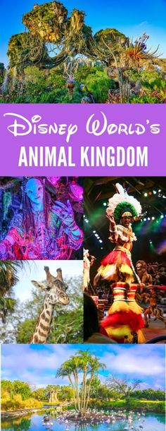 Disney Animal Kingdom Guide to Pandora and the best rides and Restaurants
