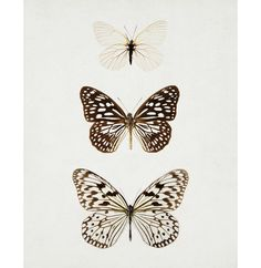 Butterfly Photograph - Black and White Butterflies, Nature, Neutral, Spring, Modern, Minimal, Specimen - Paper Kites