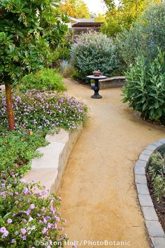 'Goldfines' decomposed granite crushed rock path in California backyard drought tolerant garden with Arbutus 'Marina'